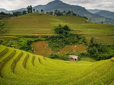 Rice Fields In Mu Cang Chai - Vietnam