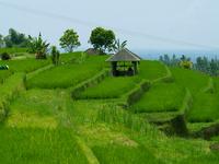 Jatiluwih Rice Fields
