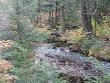 Ricketts Glen State Park Landscape - Pennsylvania
