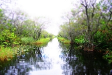 Riding On Fan Boat - Florida Everglades