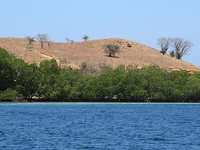 Christmas Hot Deal - Exploring Komodo Park