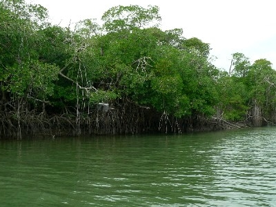Champotón River