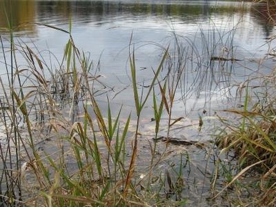 Riparian Restoration  Speed  River