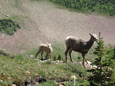 Rockwell Falls Trail Views - Glacier - Montana - U
