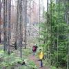 Rocky Point Trail - Glacier - Montana - USA