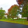 Roseville Park Oval