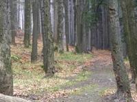Route through Massif of Parkowa Mountain