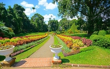 Royal Botanical Gardens At Kandy