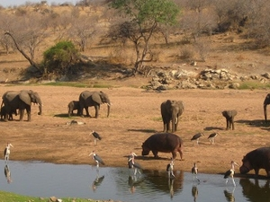 3 Days Safari in Ruaha National Park