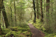 Ruapani Circuit Track - Te Urewera National Park - New Zealand