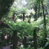 Ruapani Forest - Te Urewera National Forest - New Zealand