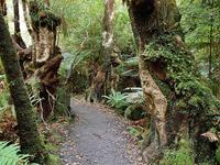 Ruatoki Road End to Wharekahika Hut Track