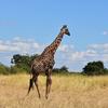 Rungwa Game Reserve