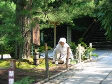 Ryoanji Vrouw Onderhoud Het Mos