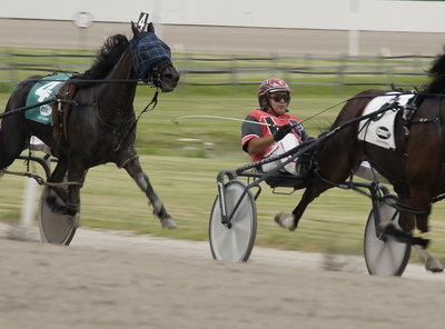 Harness Racing At Raceway Park