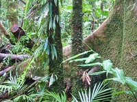 Wet Tropics of Queensland