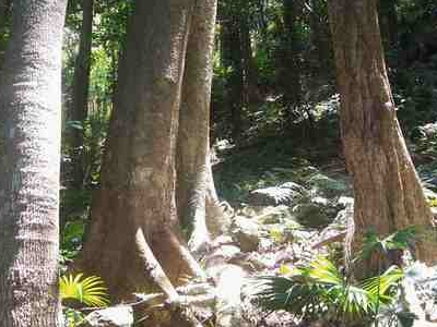 Sub Tropical Rainforest At Mount Keira