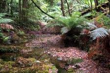 Rainforest Of Deua National Park