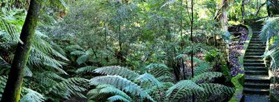 Rainforest Walk At The National Botanic Gardens