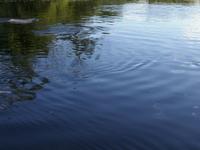 Yacuma River