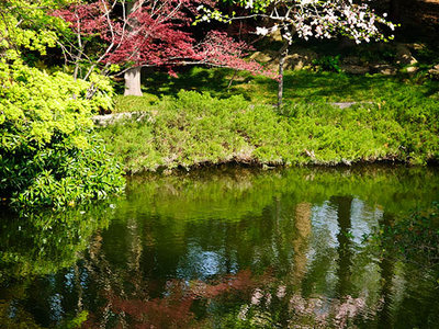 Reflections Of The Spring Vegetation