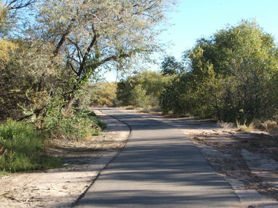 The Paseo Del Bosque Trail