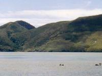 Lago Rotoaira