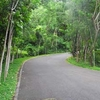 Road At Lignon Hill