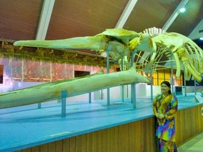 Sabah State Museum & Heritage Village - Sabah