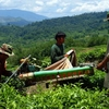 Sabah Tea Garden - View