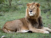 6 Days Masai Mara, Lake Nakuru And Amboseli