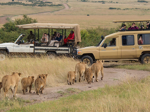 Masai Mara, Lake Nakuru 4 Days Luxury Tour