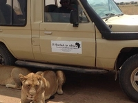 6 days safari real tanzania experience