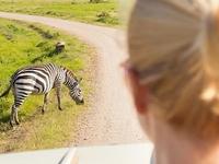 Private Amazing Tanzania Safari Experience