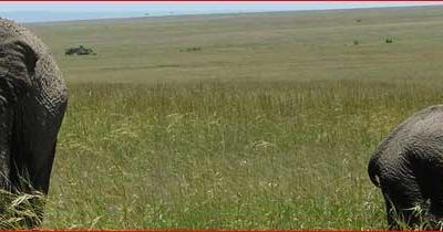 Safari Views 02