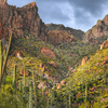 Saguaros Along Apache Trail