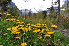 Saint Mary Falls Trailviews - Glacier - Montana - USA
