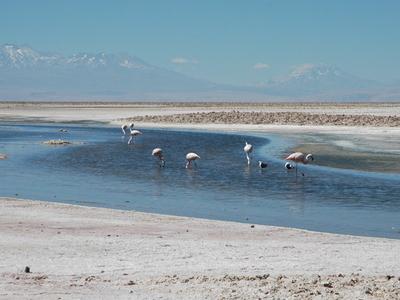 Salar De Atacama With Pular