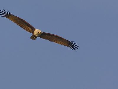 Salim-ali-bird-sanctuary