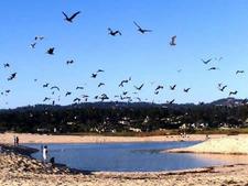 Salinas River State Beach Wldlife