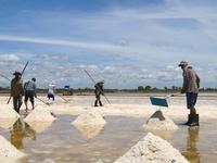 Salt Farms