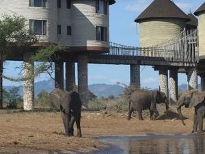 The Elephant Trail Safari Fotos