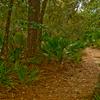 Salt Springs Observation Trail