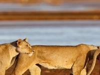 Samburu 3 Days Safari Packages