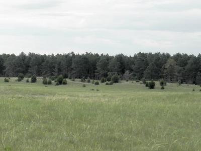 Samuel R McKelvie National Forest