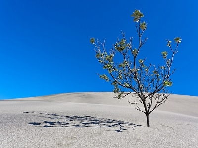 Sand Dune @ Muruwai - North Island NZ