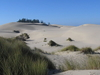 Sand Dunes At Oregon Dunes National Recreation Area.