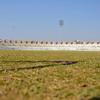 Sardar Patel Stadium The Grass