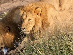 Savannah Lowlands & Big Five - 12 day safari