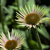 Schedel Arboretum - Elmore Ohio